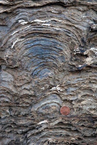 cross-sectional view of a stromatalite in the Proterozoic Helena Formation, Glacier NP.